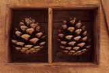 Two Pine Cones Photographic Print by Den Reader