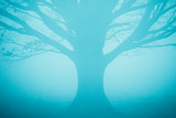 Blue Tree in Fog Photographic Print by Andy Bell