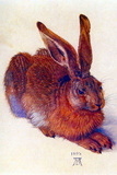 Albrecht Durer Field Hare Poster Poster by Durer Albrect