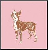 Boston Terrier Mounted Print by  Pop Ink - CSA Images