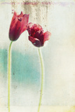 Tulips Fading Photographic Print by Mia Friedrich