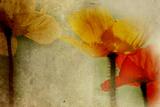 Mia Friedrich - Poppies Talking - Fotografik Baskı