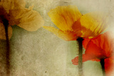 Poppies Talking Photographic Print by Mia Friedrich