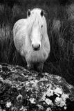 Devon Shire Photographic Print