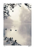 Misty Mallards Giclee Print by Donald Satterlee