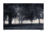Foggy Fairway Giclee Print by Donald Satterlee