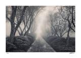 Blossoming Path Limitierte Auflage von Donald Satterlee