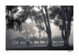 Foggy Commute Giclee Print by Donald Satterlee