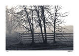 Fenced Fog Giclee Print by Donald Satterlee