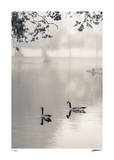 Canada Geese Giclee Print by Donald Satterlee