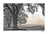 Scenic Oak Giclee Print by Donald Satterlee