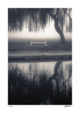 Weeping Willows Teardrop Giclee Print by Donald Satterlee