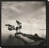 Water Tree Framed Print Mount by Moises Levy