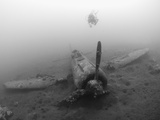 Diver Explores the Wreck of a Mitsubishi Zero Fighter Plane Photographic Print by Stocktrek Images
