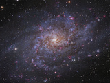 Messier 33, Spiral Galaxy in Triangulum Fotografisk trykk av Stocktrek Images