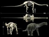 Anatomy of a Titanosaur Photographic Print by Stocktrek Images