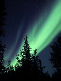 Aurora Borealis Above the Trees, Northwest Territories, Canada Photographic Print by Stocktrek Images