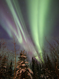 Aurora Borealis with Trees, Whitehorse, Yukon, Canada Photographic Print by Stocktrek Images
