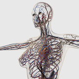 Medical Illustration of Arteries, Veins And Lymphatic System in Female Chest Area Photographic Print by Stocktrek Images