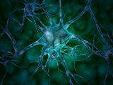 Microscopic View of Multiple Nerve Cells, Known As Neurons Photographic Print by Stocktrek Images