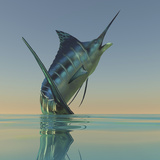 A Blue Marlin Bursts from the Ocean Surface in a Grand Leap Photographic Print by Stocktrek Images