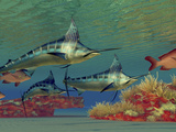 Blue Marlin And Humpback Red Snapper Fish Photographic Print by Stocktrek Images