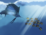 A Blue Marlin Swims After a School of Angelfish in the Ocean Photographic Print by Stocktrek Images