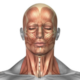 Anatomy of Human Face And Neck Muscles, Front View Photographic Print by Stocktrek Images