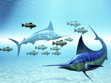 Two Blue Marlins Circle a School of Fish in Ocean Waters Photographic Print by Stocktrek Images