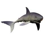 Mako Shark Photographic Print by Stocktrek Images