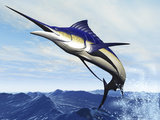 A Sleek Blue Marlin Bursts from the Ocean Surface in a Grand Leap Photographic Print by Stocktrek Images