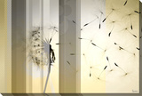 Dandelion Stretched Canvas Print by Parvez Taj