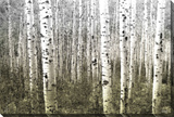 Aspen Highlands Stretched Canvas Print by Parvez Taj