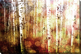 Aspen Stretched Canvas Print by Parvez Taj