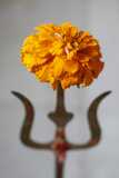 Flower and Rice Offering on Shiva Trident Photographic Print