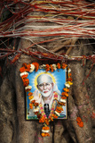 Garlanded Shirdi Sai Baba Picture on a Sacred Tree Photographic Print
