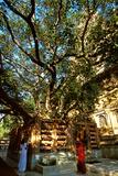 Mahabodhi Mahavihara Temple in Bodhgaya Photographic Print