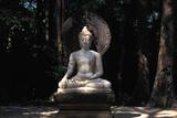 Buddha in Wat Suanmokh Forest Monastery Photographic Print