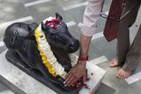 Hindu Touching a Nandi Bull Statue in Krishna Temple Photographic Print