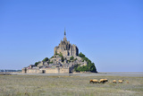 Abbey of Mont Saint-Michel Photographic Print