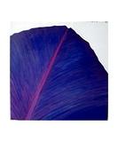 Violet Petal Photographic Print by Francoise Roullet