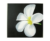 The White Flower Photographic Print by Francoise Roullet