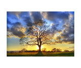 The Suntset Tree Photographic Print by Francesco Carovillano