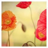 La Vie en Rose Poster by Alicia Bock