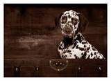Dalmatian Dog Art by Maja Hrnjak