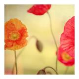 La Vie en Rose Prints by Alicia Bock