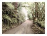 Lost Coast Road Prints by Laura Culver