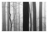 Forest Code Prints by Nicholas Bell