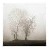 Four Trees in Fog Posters par Nicholas Bell