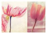 Poppy & Tulip Posters by Myan Soffia